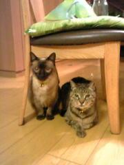 猫のトム君とチータ君