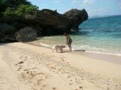 砂浜で飼い主と遊ぶゴールデンレトリーバー