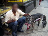車椅子の犬と飼い主さん